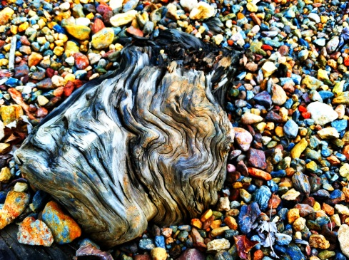 A piece of driftwood surrounded by colorful rocks at the edge of the shoreline.  ©Tracy J. Thomas, 2012. All rights reserved.