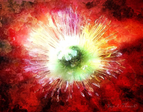 """Fire Poppy"" - ©Tracy J. Thomas, 2012. All rights reserved."