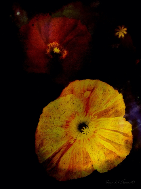 """Spring Equinox 1"" - ©Tracy J. Thomas, 2012. All rights reserved."