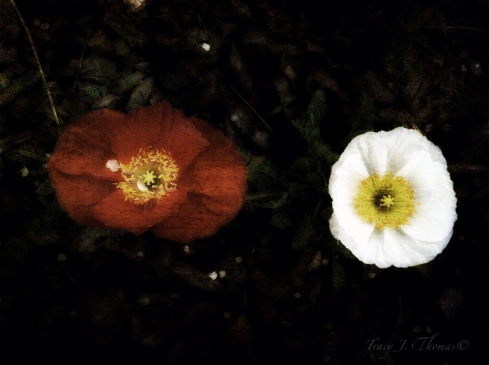 """Spring Equinox 2"" - ©Tracy J. Thomas, 2012. All rights reserved."