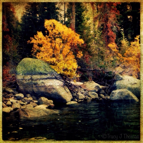 """Nature's Symphony"" - Fall colors at Independence Lake, Tahoe National Forest, CA.  ©Tracy J. Thomas, 2013. All rights reserved."