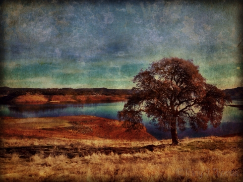 """Lonesome Oak"" - ©Tracy J. Thomas, 2014. All rights reserved."