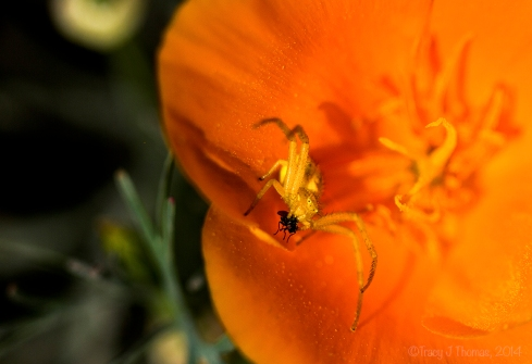 The Spider and the Fly - ©Tracy J Thomas, 2014. All rights reserved.