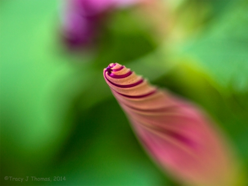 """Twirling"" - ©Tracy J Thomas, 2014. All rights reserved."