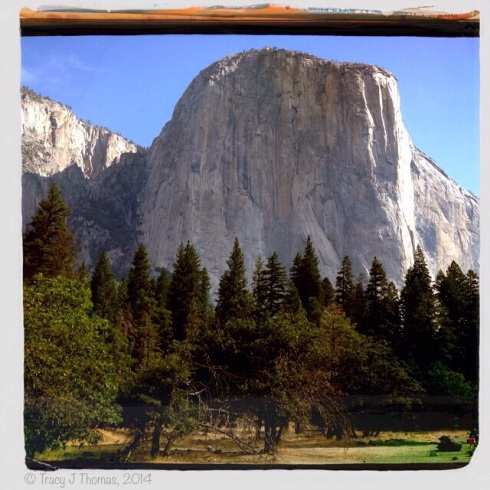 El Capitan. Yosemite National Park. ©Tracy J Thomas, 2014. All rights reserved.