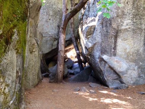 Granite and trees near lower Yosemite Falls. Yosemite National Park. ©Tracy J Thomas, 2014. All rights reserved.