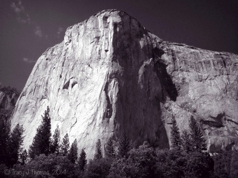 The majestic face of El Capitan. Yosemite National Park. ©Tracy J Thomas, 2014. All rights reserved.